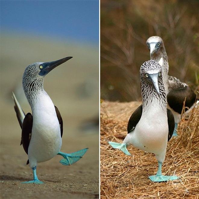 необыкновенная птица