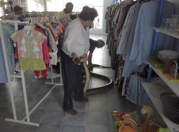 змея в магазине