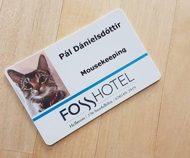 Визитка кота, работающего в отеле