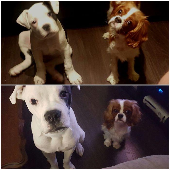 Два щенка и они же взрослые
