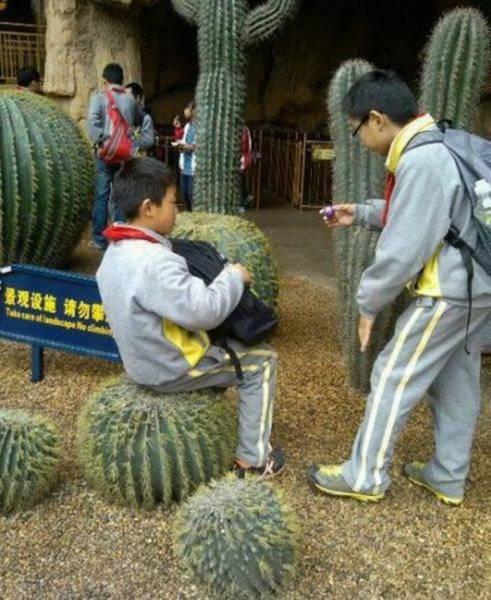 мальчик сидит на кактусе