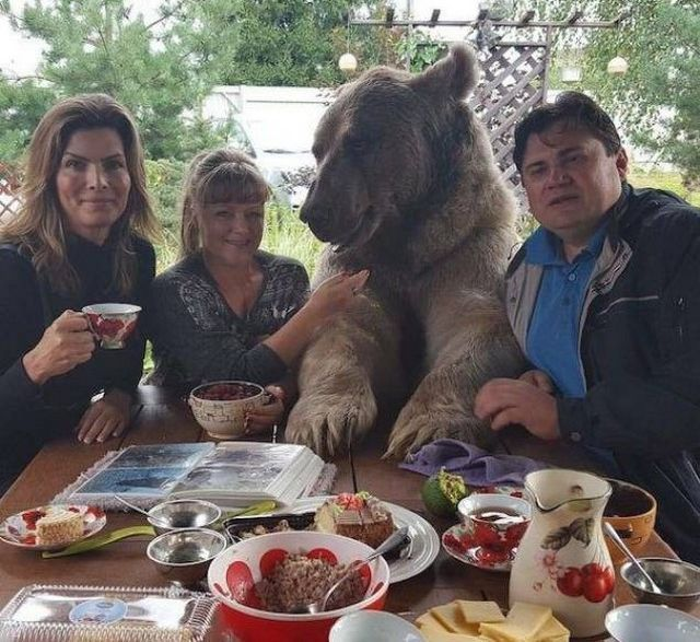 медведь с людьми за столом