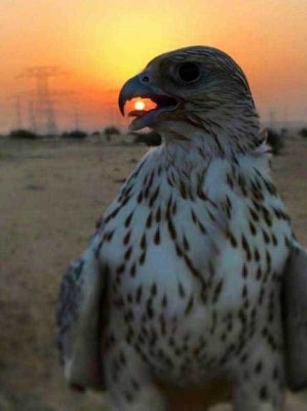 орел с солнцем в клюве