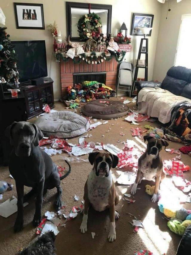 собаки в разгромленной комнате