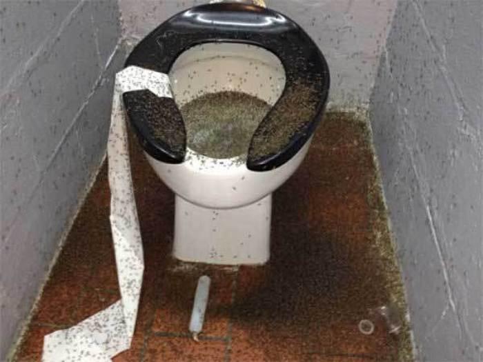 унитаз с туалетной бумагой