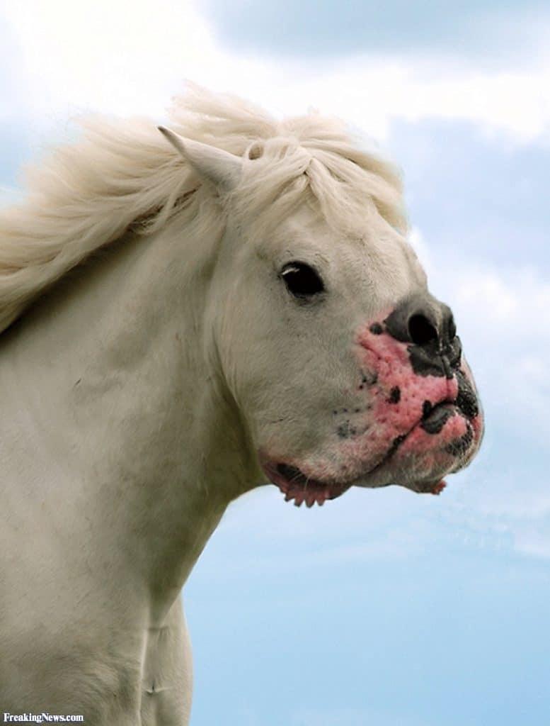белый конь с мордой собаки