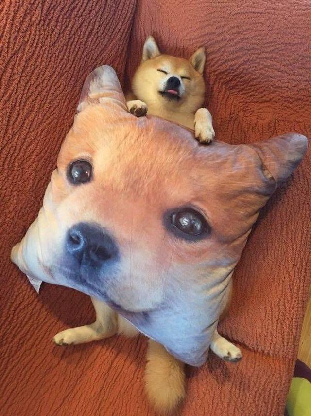пес и подушка