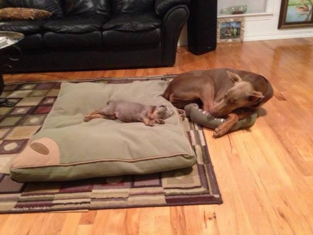 мама-собака и её щенок