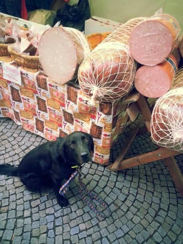 пес и колбаса