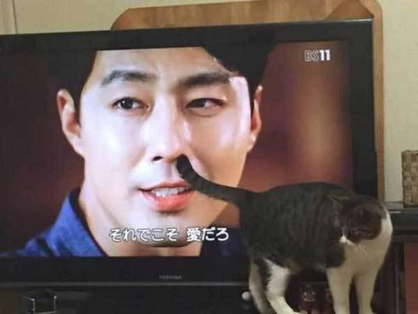 кошка перед телевизором