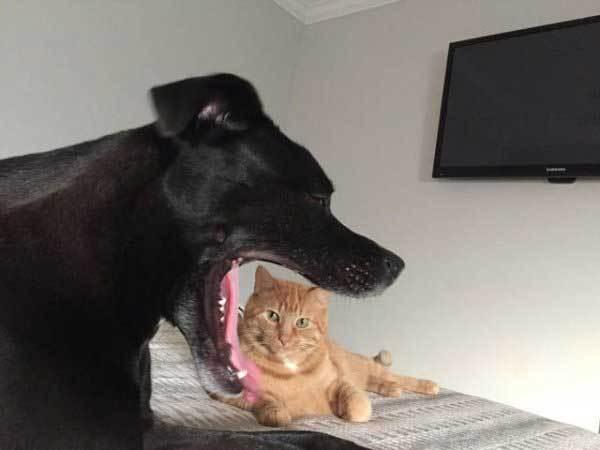 черный пес и рыжий кот