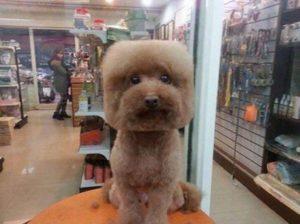 Собака с квадратной головой