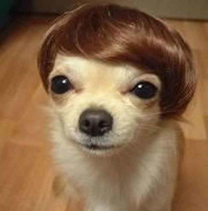 Собака с челкой