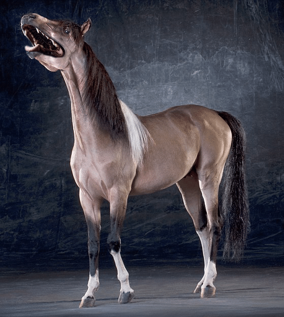 лошадь с мордой собаки