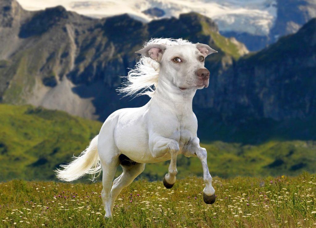 белый кот с головой собаки