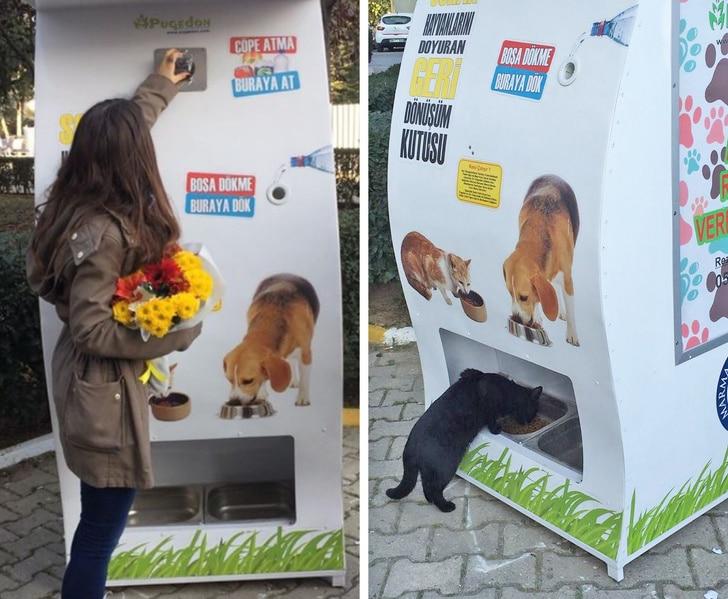 автомат с бесплатным кормом для животных