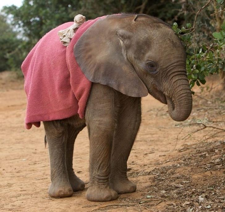 слоненок с хоботом во рту