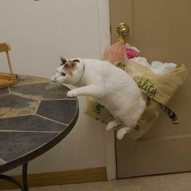 кот в воздухе