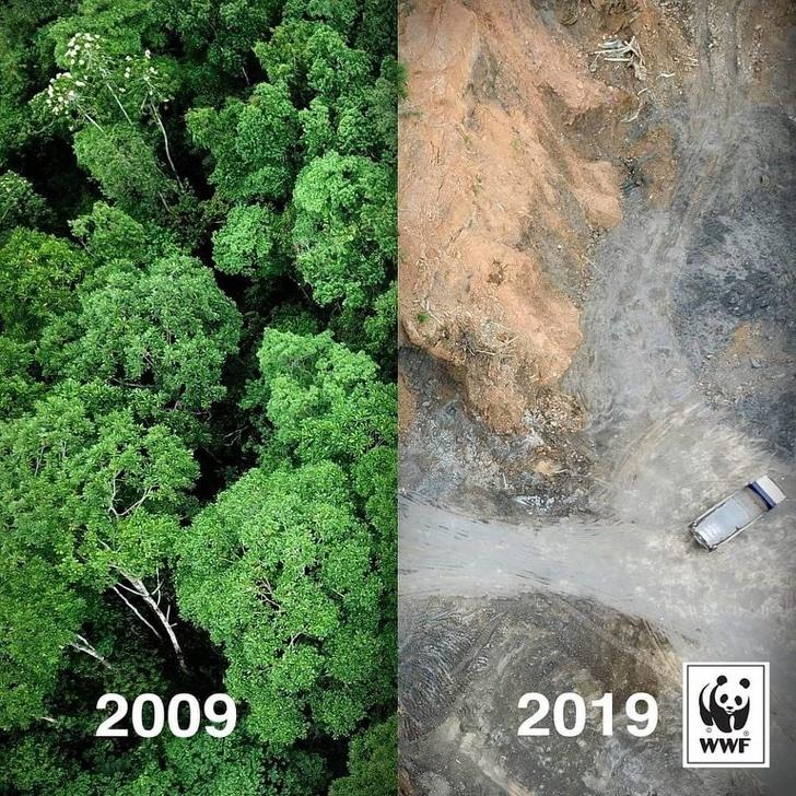 лес в 2009 году и в 2019