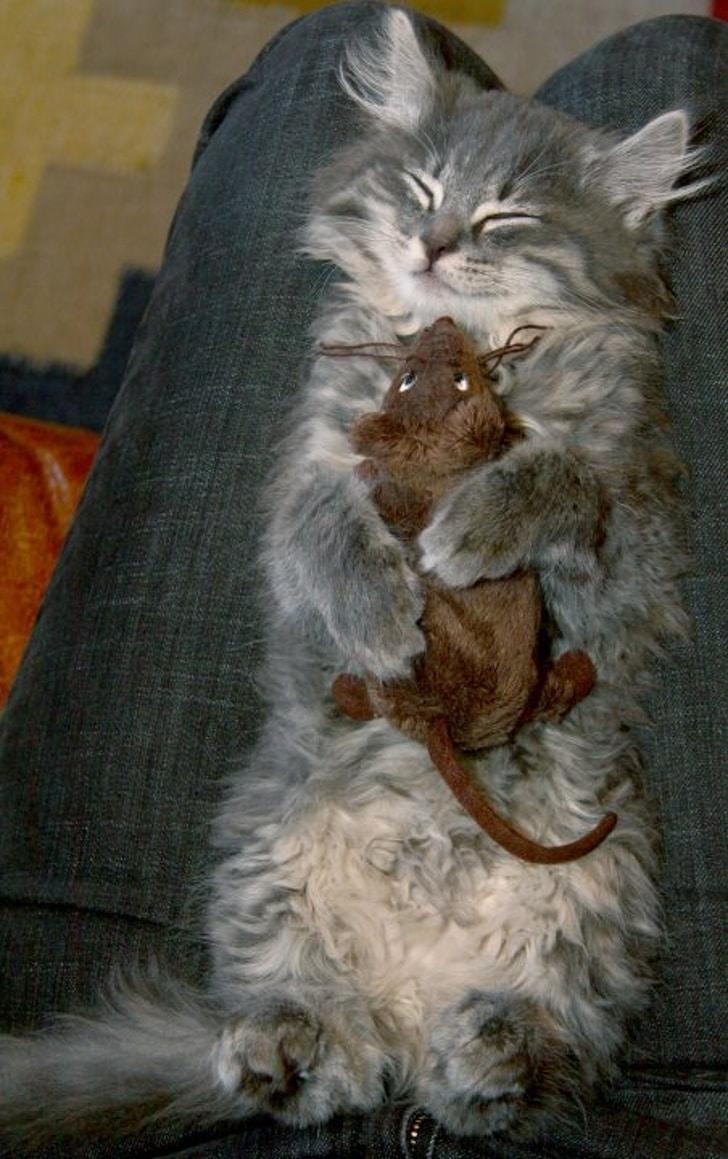 серый котенок в обнимку с мышкой