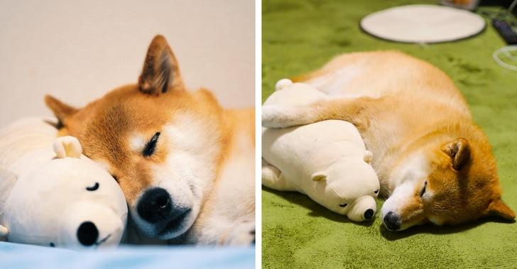 собака с игрушечным медведем