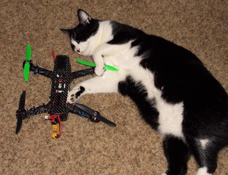 черно-белый кот с квадрокоптером