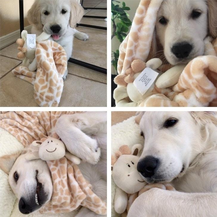 щенок в одеяле