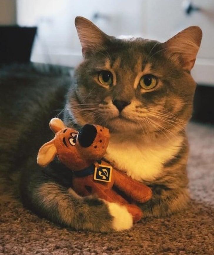 кот с игрушечной собакой