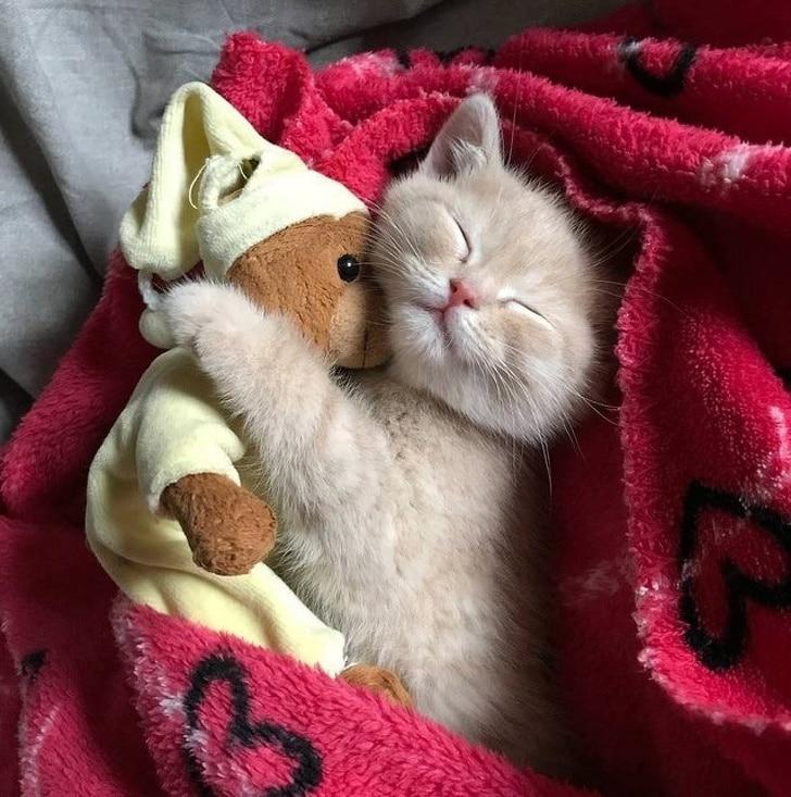 Доброй ночи картинки с котенком