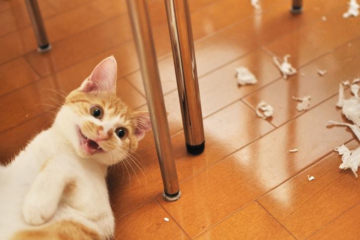 балованный кот