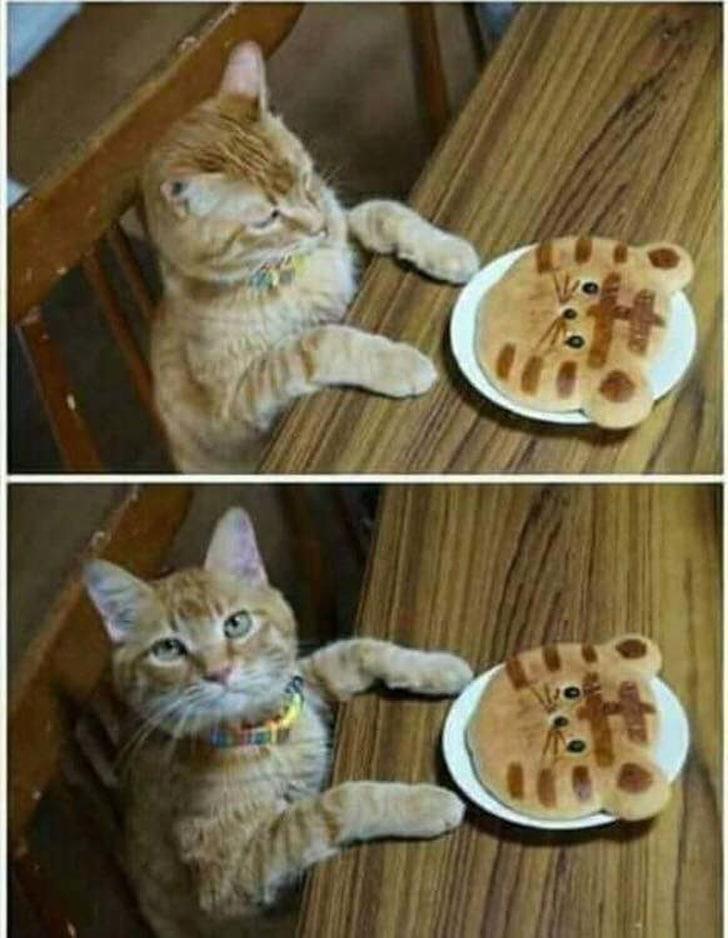 блинчики для кота