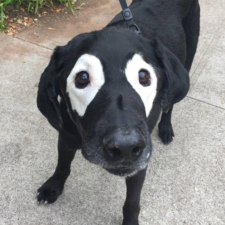 болезнь витилиго у собак