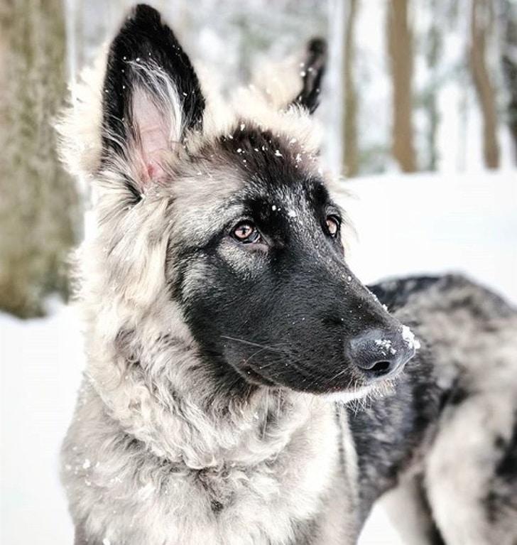 необычный пес