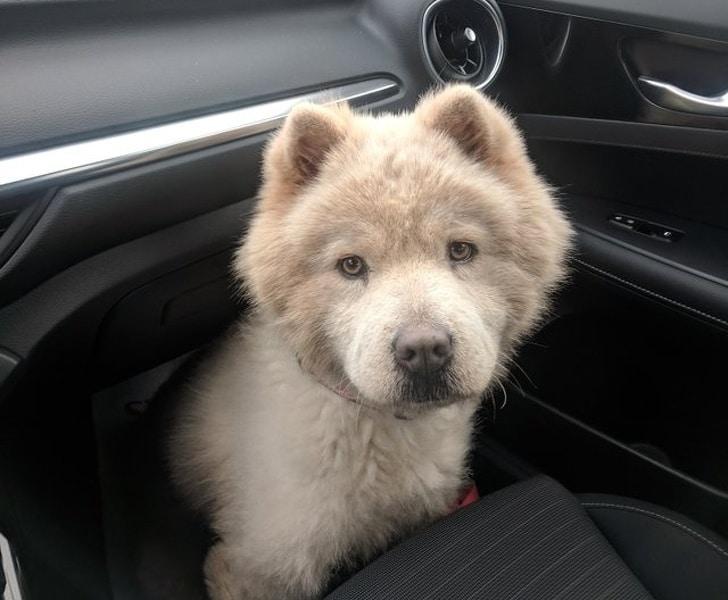 красивая собака