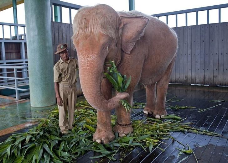 слон-альбинос