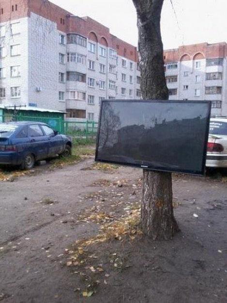 телевизор на дереве