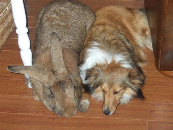 собака и большой кролик