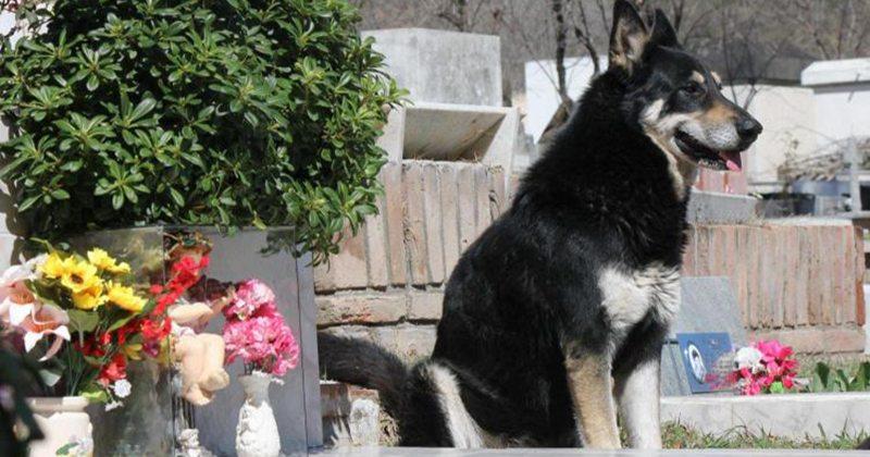 черная собака на кладбище