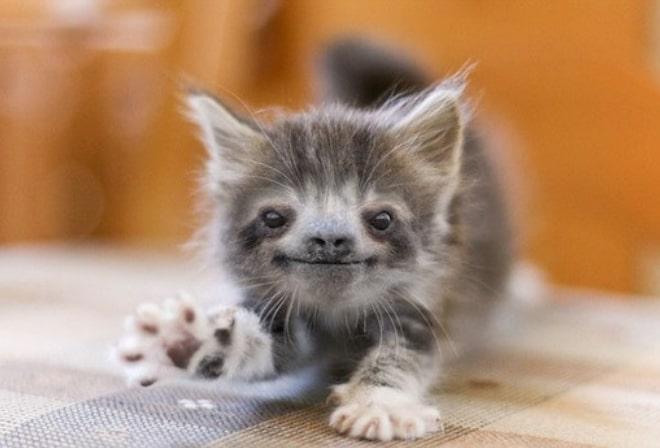 котенок с мордой ленивца