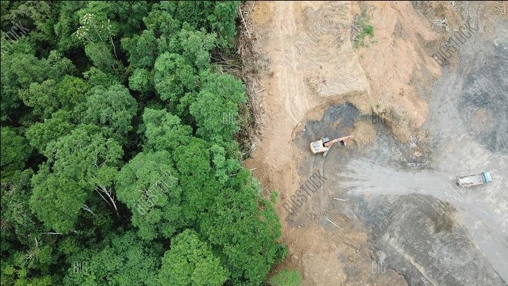 тропический лес в малайзии