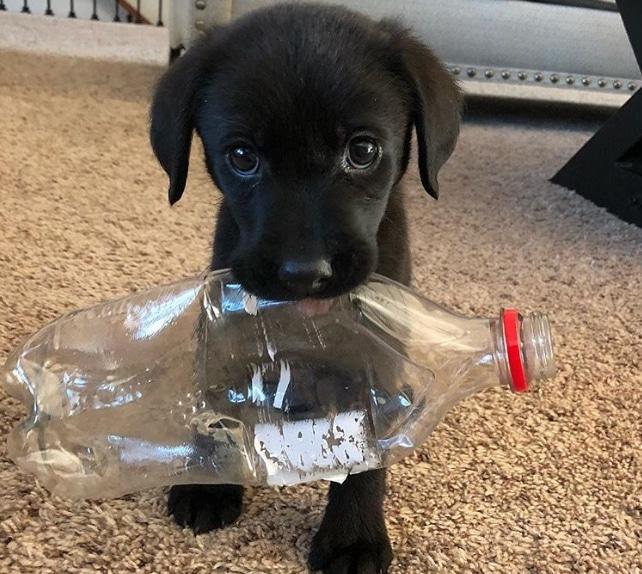 черный щенок с пластиковой бутылкой во рту