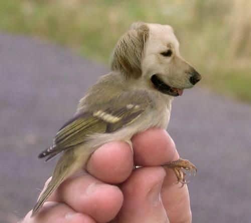 голова пса и тело птицы