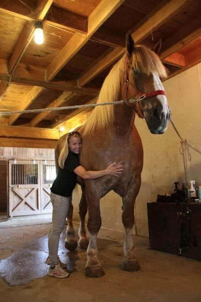 конь большой джейк