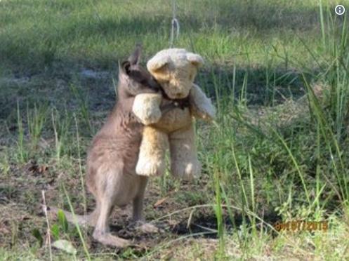кенгуру с плюшевым мишкой