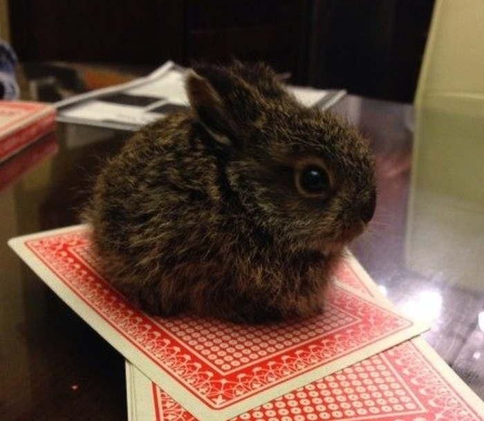 крошечный кролик сидит на игральной карте