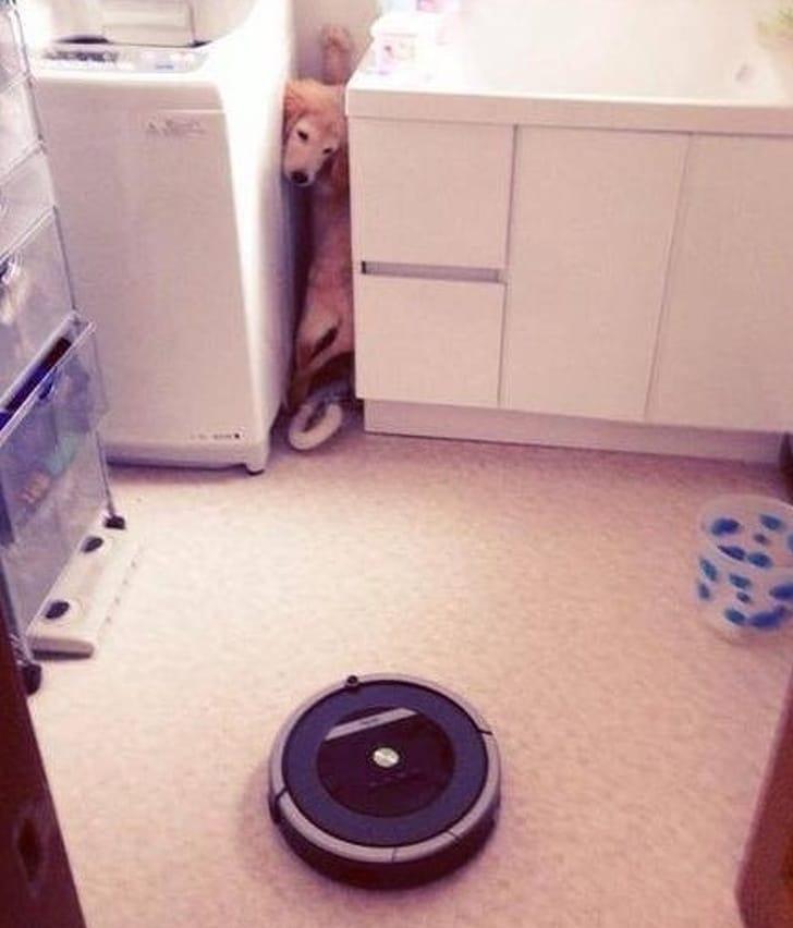собака прячется в кухне от пылесоса