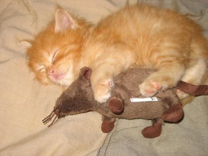 рыжий котенок спит с игрушечной мышей
