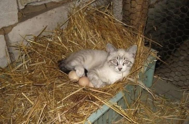 серый котенок на насесте