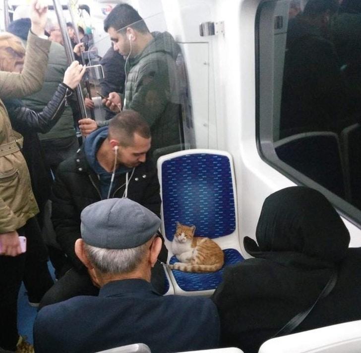 рыжий кот на сидении в метро