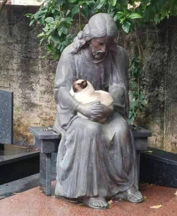 кот сидит на статуе